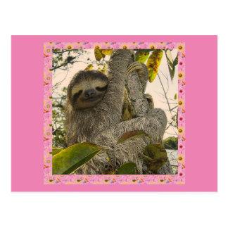 sloth postcard