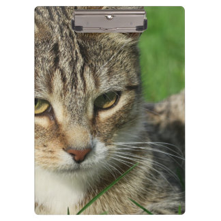 small cat on a green spring meadow clipboards