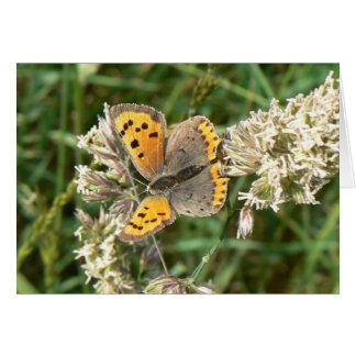 Small Copper Butterfly Note Card
