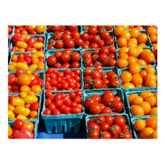 Small Red and Orange Tomatoes Postcard