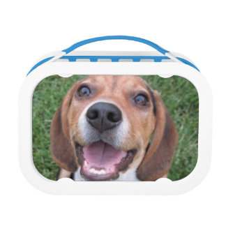 Smiling Chewing Beagle Pup Lunch Box
