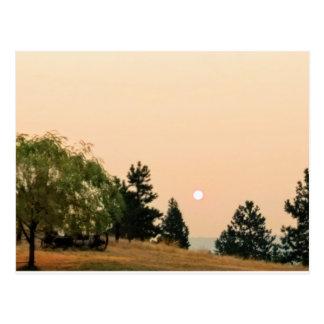 Smoke on the sun postcard