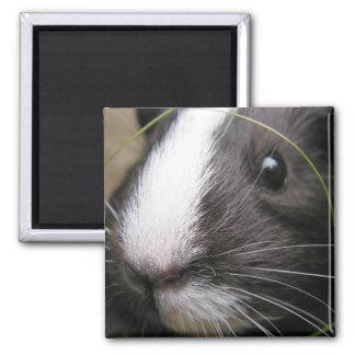 Smooth, Black and White Guinea Pig Face Closeup Square Magnet