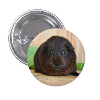 Smooth, Short Hair, Golden Agouti Guinea Pig 3 Cm Round Badge