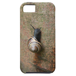 Snail iPhone 5 Cover