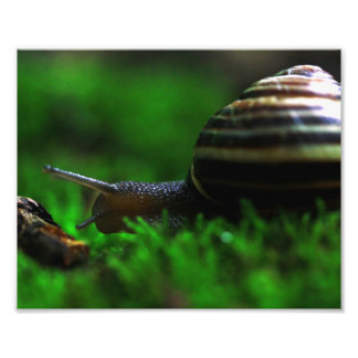 Snail Mornings Photo Print