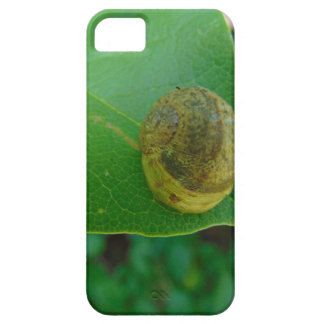 Snail on a magnolia leaf case for the iPhone 5