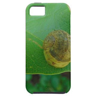 Snail on a magnolia leaf iPhone 5 cases