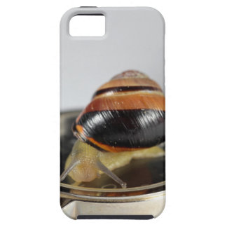 Snail on a watch iPhone 5 cover