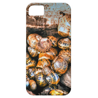 Snails gathered together in a tree stump iPhone 5 cover