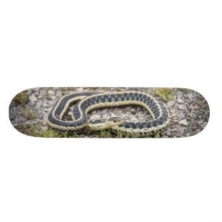 """Snake 7¾"""" Skateboard"""