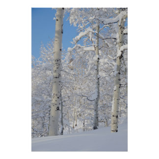 Snow-Covered Aspens, Beartrap-Desolation Ridge Poster