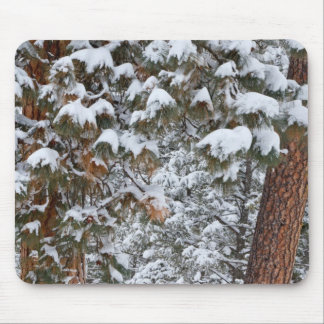 Snow fills the boughs of ponderosa pine trees mouse pad