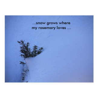 Snow Grows where my Rosemary Loves ... Postcard