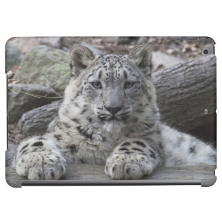 Snow Leopard Cub Sitting