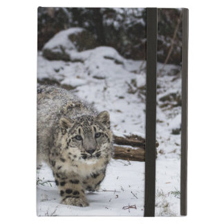 Snow Leopard Cub Stalking Birds Cover For iPad Air