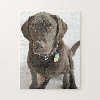 Snow Sprinkled Chocolate Lab Photograph Puzzle