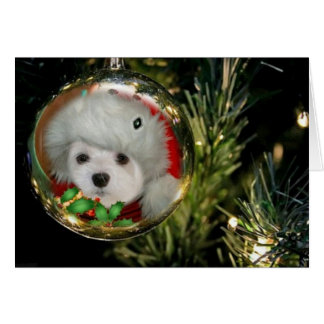 Snowdrop the Maltese at Christmas Card
