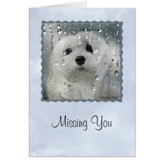 Snowdrop the Maltese Greeting Card (Missing You)