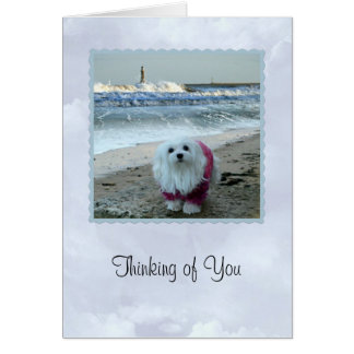 """Snowdrop the Maltese """"Thinking  of You Card"""