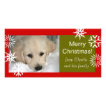 Snowflakes Dog Merry Christmas Photo Cards