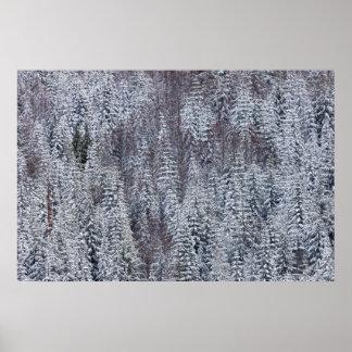 Snowy Forest, Mt. Rainier National Park Posters