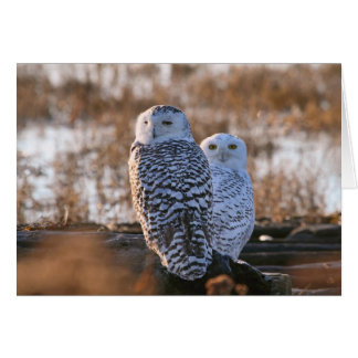 Snowy Owl Couple Greeting Card