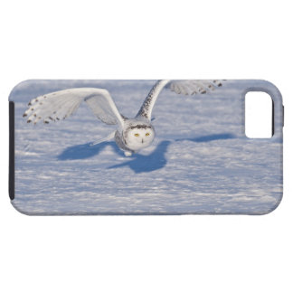 Snowy Owl in flight. Case For The iPhone 5