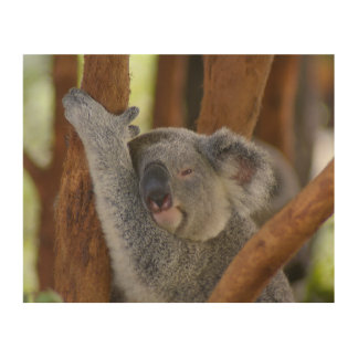 So Sweet Koala Bear Wood Wall Art