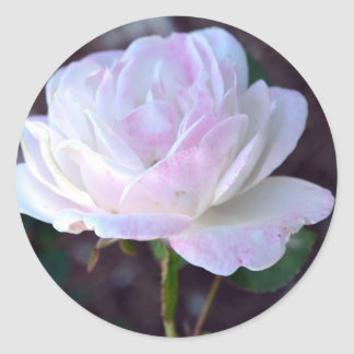 Soft Pink and White Rose-60 Classic Round Sticker