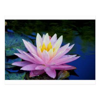Soft Pink Waterlily Postcard