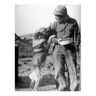 Soldier and His German Shepherd WWII Postcard