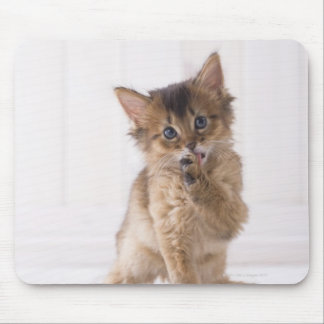 Somali Licking Forefoot Mouse Pad