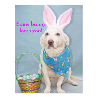 Some bunny loves you! postcard