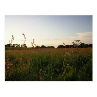 Somerset Meadow during sunset. Postcard