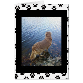 Sorry for your loss.. (dog)(2) greeting card