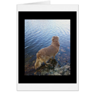 Sorry for your loss.. (dog) greeting card