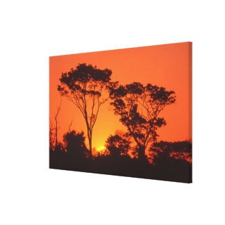 South Africa.  African sunset. Canvas Print