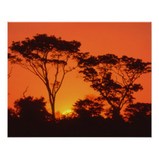 South Africa.  African sunset. Poster