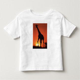 South Africa, Kruger NP.  Giraffe (Giraffa Tee Shirt