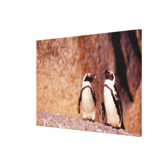 South Africa, Simons Town. Jackass Penguins 3 Canvas Print