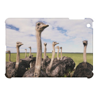 South Africa, View of ostrich iPad Mini Cover
