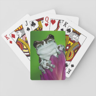 South America, Brazil, Amazon Basin. Close-up of 2 Playing Cards