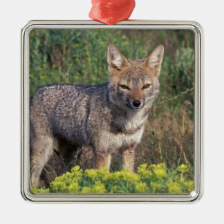 South America, Chile, Torres del Paine NP, Christmas Ornament