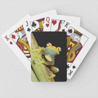 South America, Ecuador, Amazon. Tree frog (Hyla Playing Cards