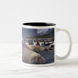 South America, South Georgia Island, Elephant Two-Tone Coffee Mug