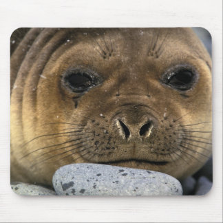 South America, South Georgia Island. Weddell Mouse Pad