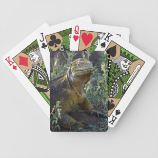 South American Green Iguana Bicycle Playing Cards
