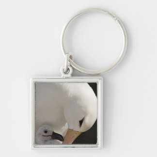 South Atlantic, Falkland Islands, New Island. Silver-Colored Square Key Ring