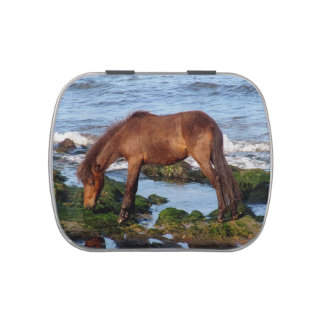 South Devon Beach Dartmoor Pony Eating Seaweed Jelly Belly Candy Tin